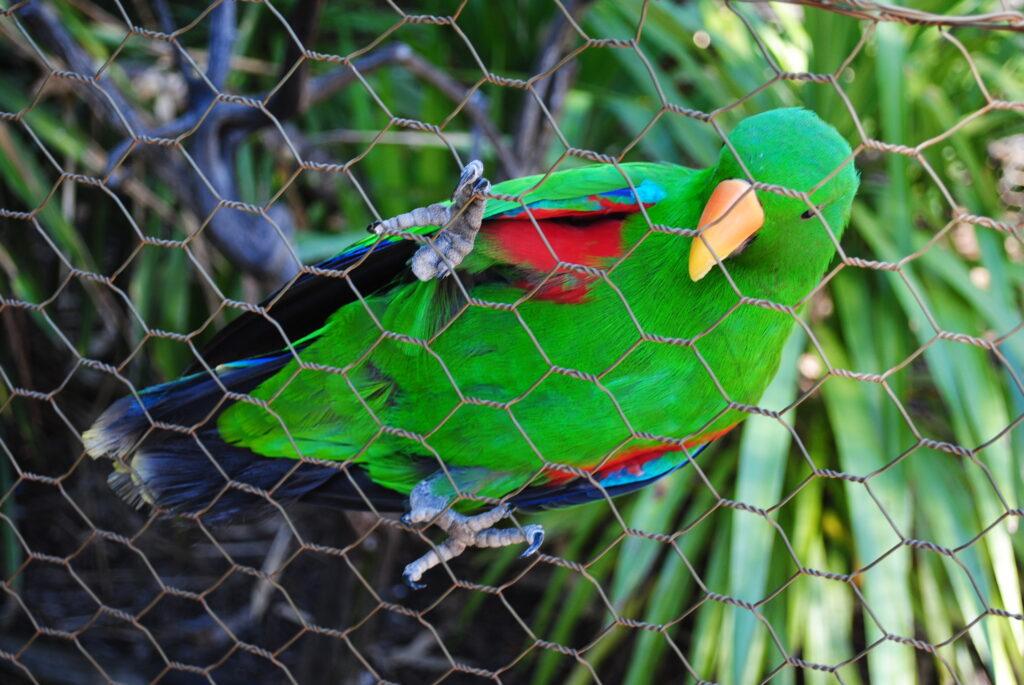 Papugi stado