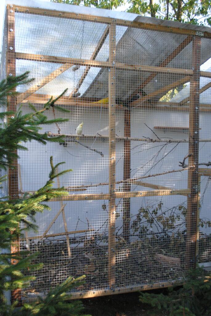 Budowa woliery dla papug