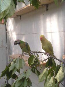 Gałęzie dla papug