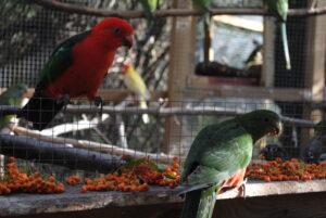 Jedzenie dla papug
