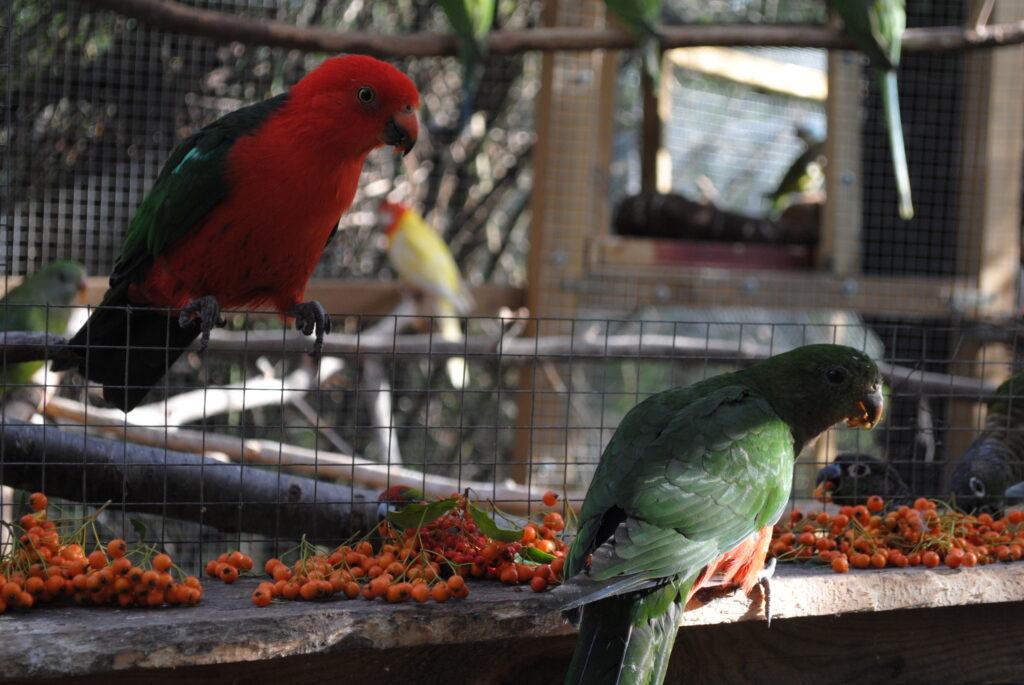 Karma dla papugi