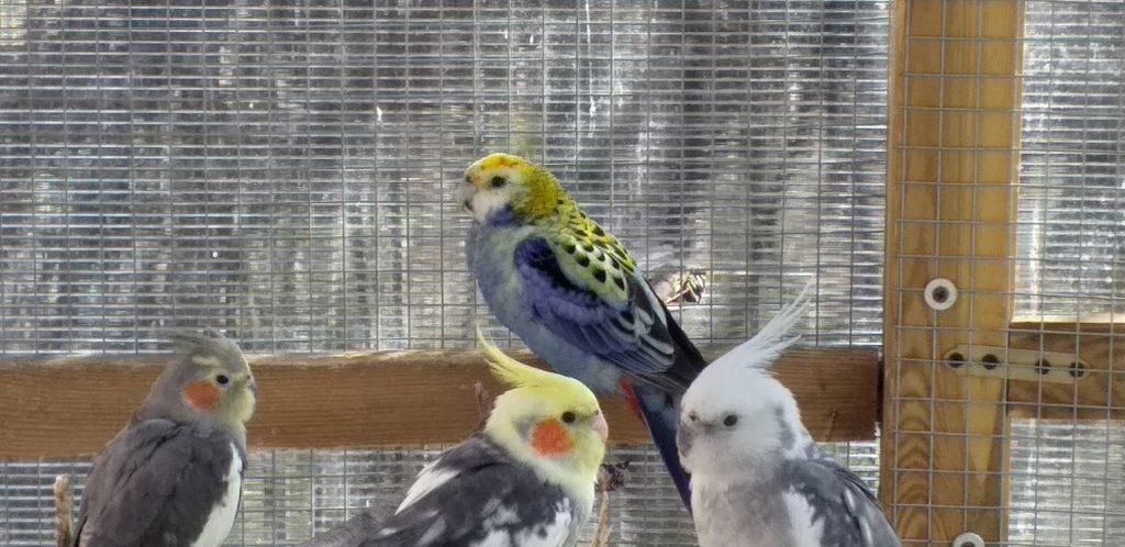 Karma zimowa dla ptaków