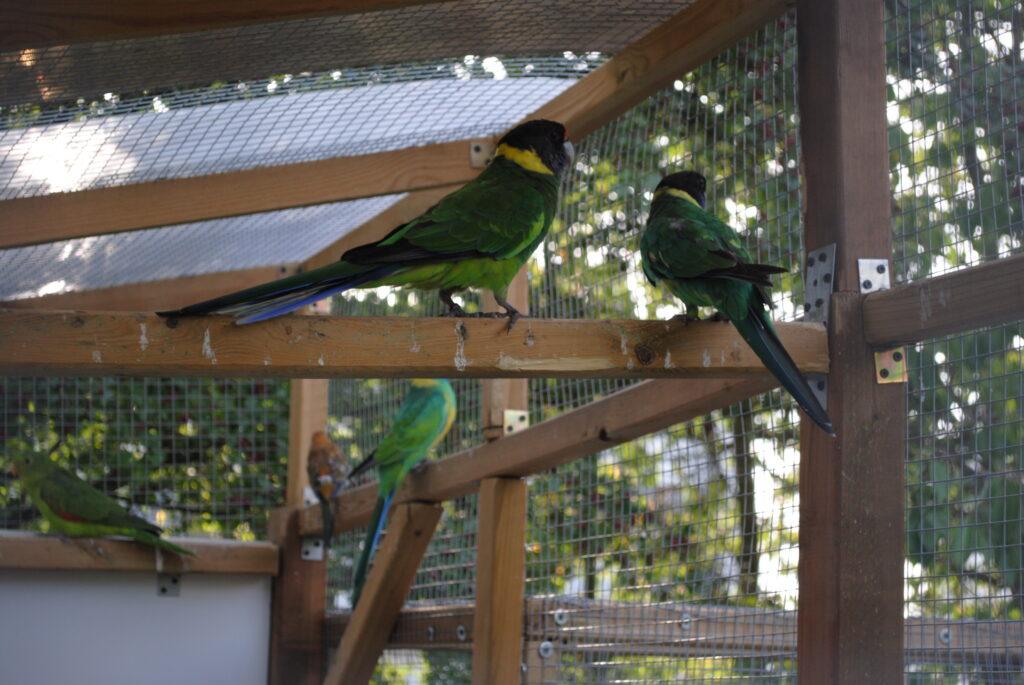 Zadaszenie dla papug