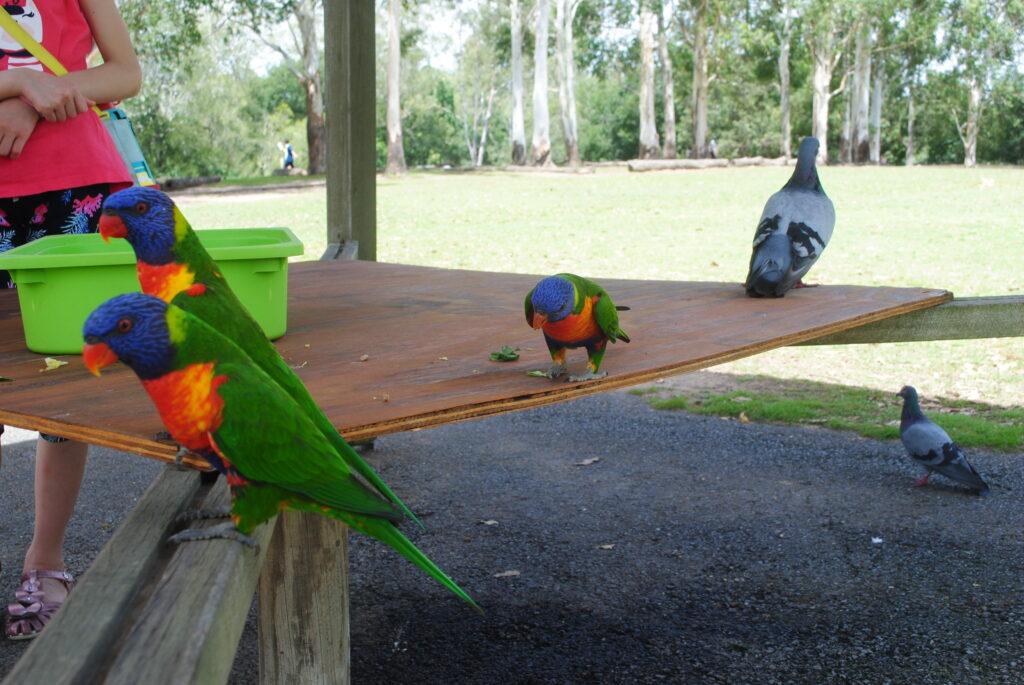 Karmy dla papug