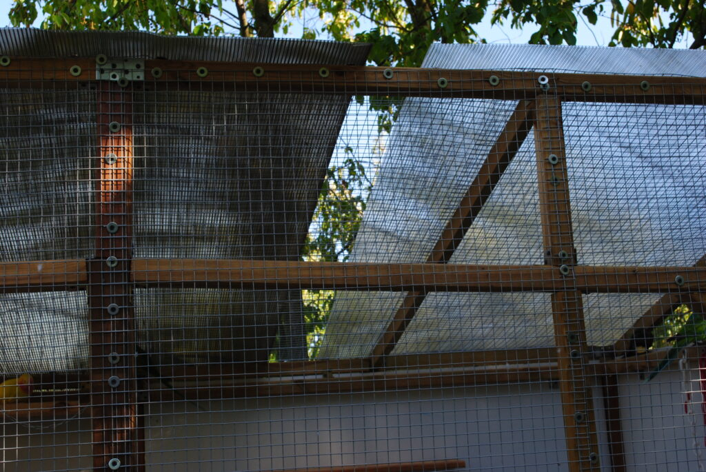 Dach dla papug
