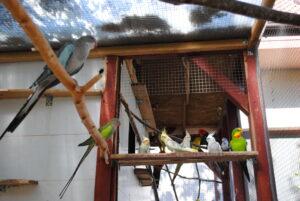 Mieszanka dla papug