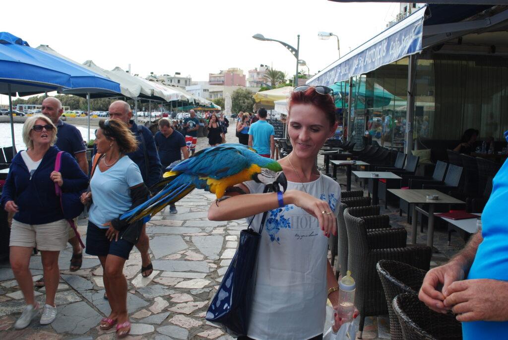Oswajanie papugi