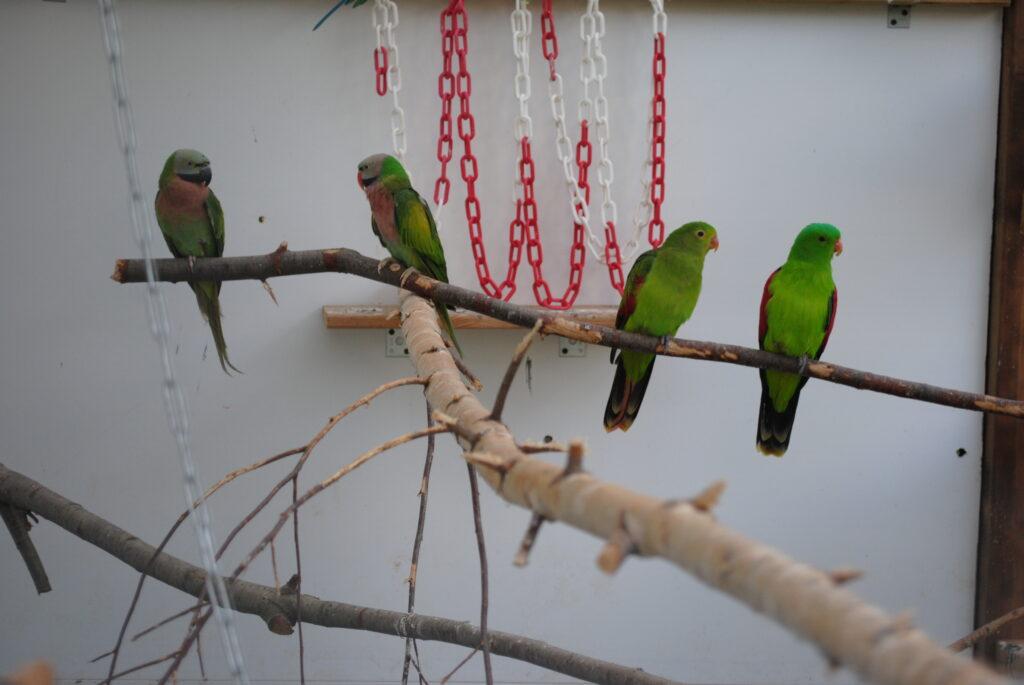 Woliera zewnętrzna dla papug