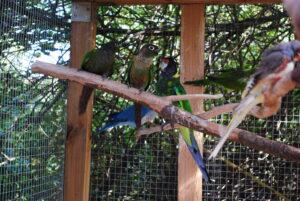 Papugi w hodowli
