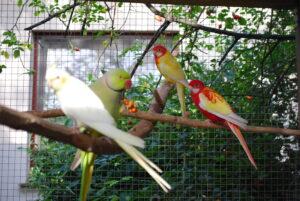Pokarm dla papug średnich