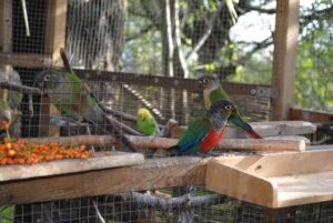 Tania karma dla papug