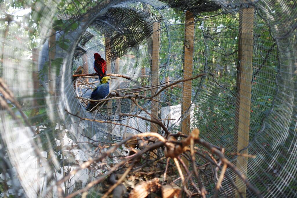 Tunel z siatki dla papug