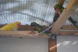 Woliera dla papug na dworze