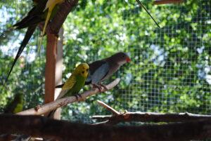 Woliera dla papugi