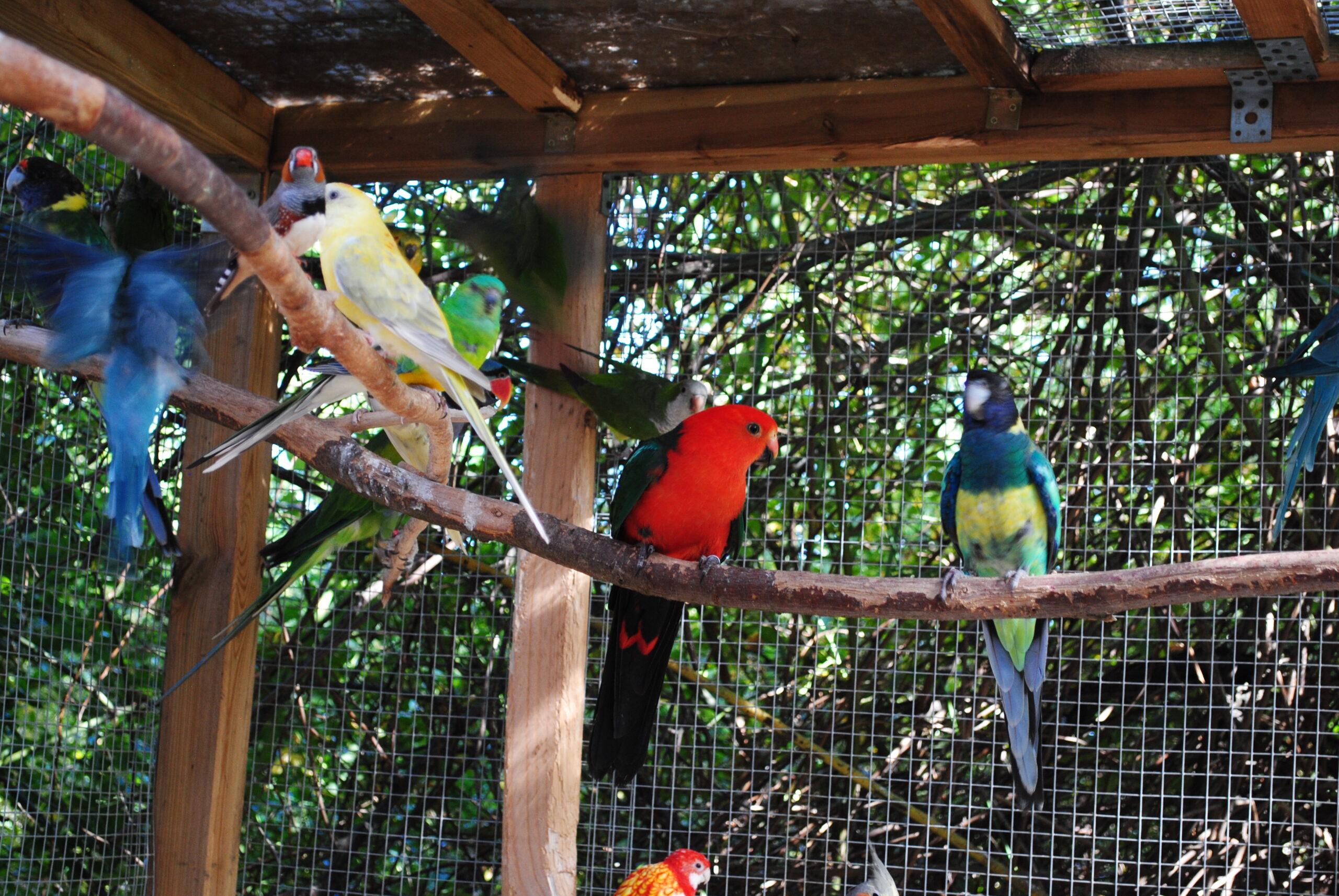 Woliera ogrodowa dla papug