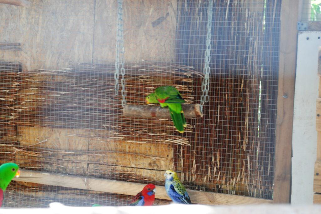 Wyposażenie klatek dla papug