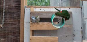 Zabawa papug