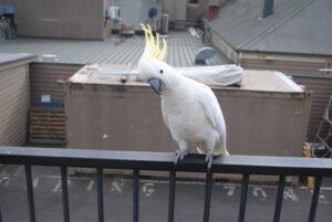 Zabawa z papugą