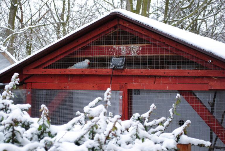 papugi i zima