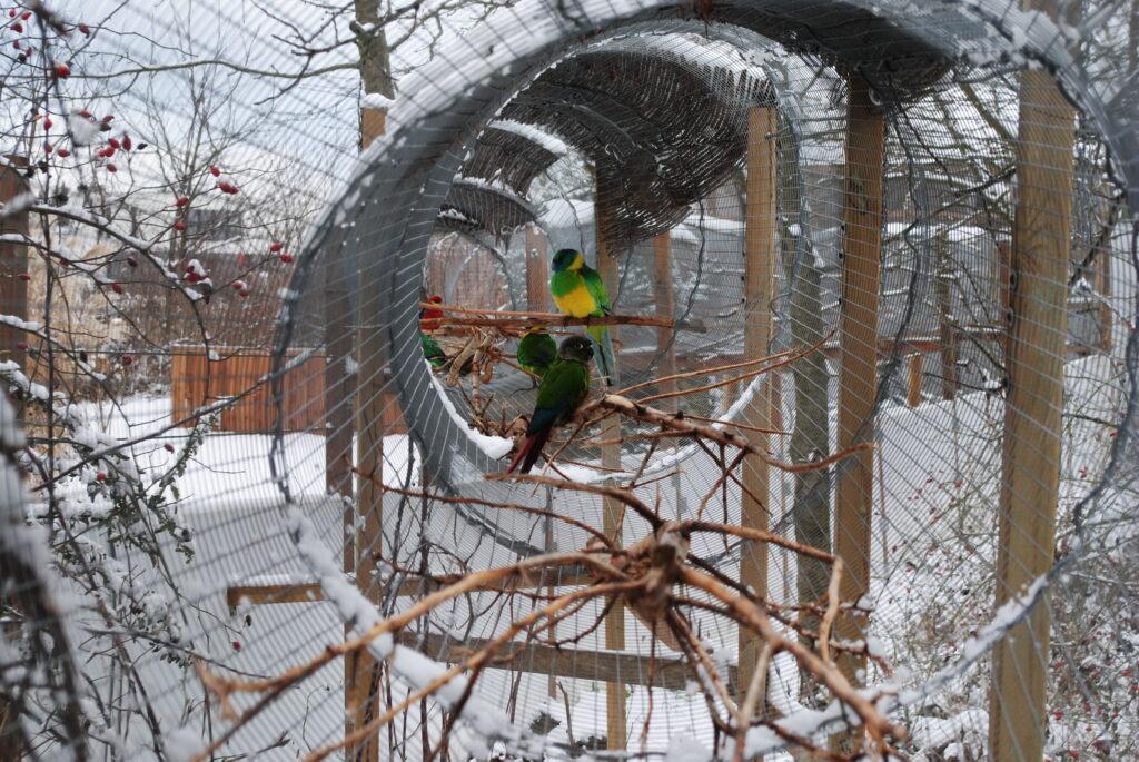Jak papugi znoszą zimę