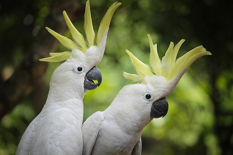 Pokarm dla papug dużych