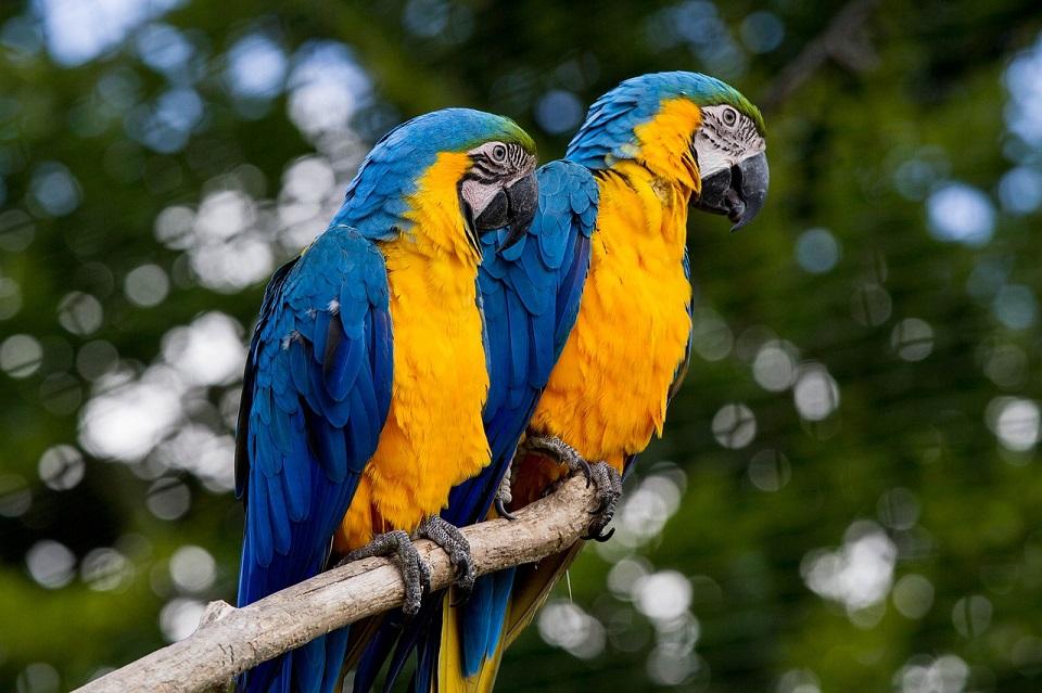 Karma dla papug dużych