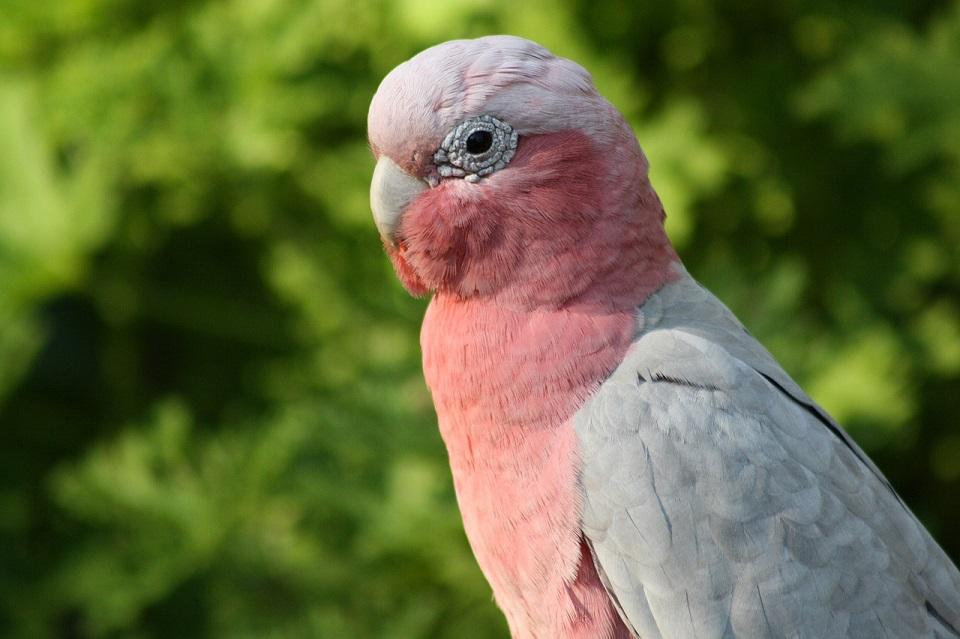 Mieszanka dla kakadu