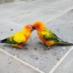 Co zrobić, żeby nasze papugi były legalne ?