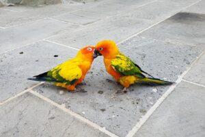 papugi Ameryki