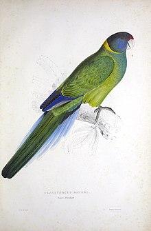 Jak wygląda papuga ?