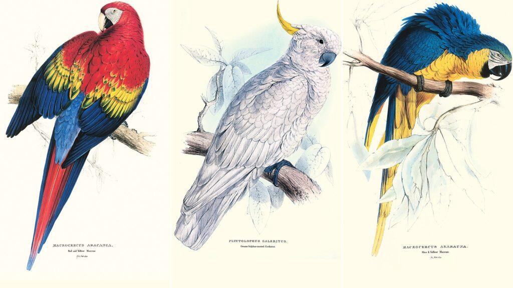 Jakie są gatunki papug ?