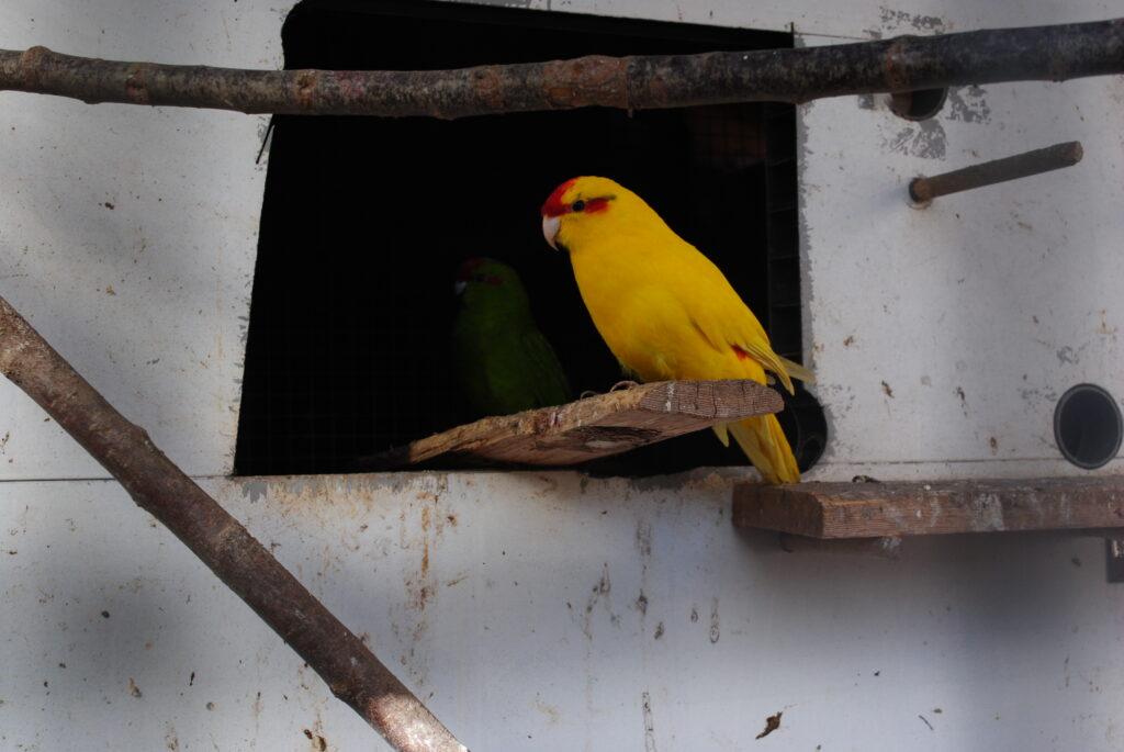 Czyszczenie klatki papugi